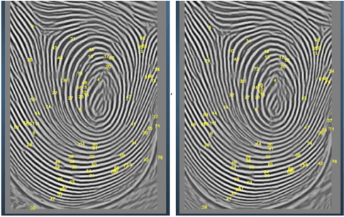 Analysis of fingerprints